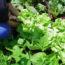 Almacenamiento En Horticultura Y Floricultura