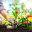Acondicionamiento Y Conservación De Flores Y Verdes De Corte