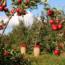 Poda e injerto de frutales